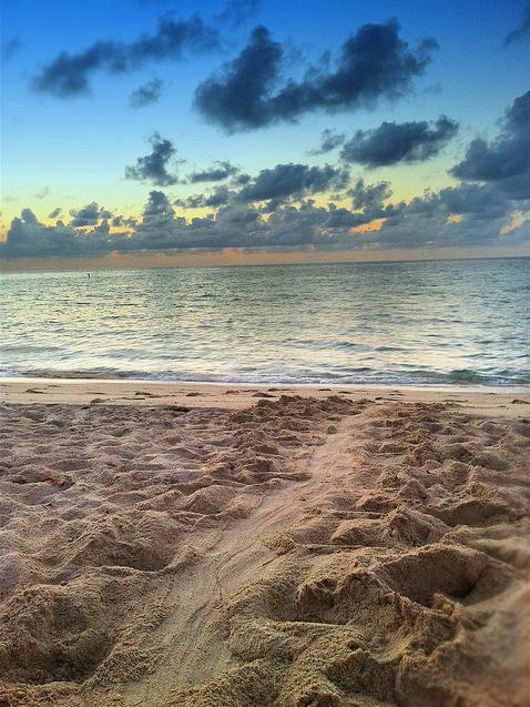 Turtle tracks on Fort Lauderdale beach