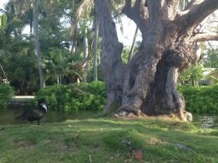 gnarledtree